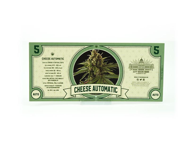 Cheese Auto