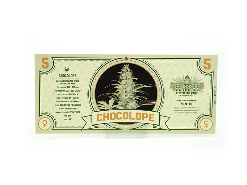 Chocolope Feminised