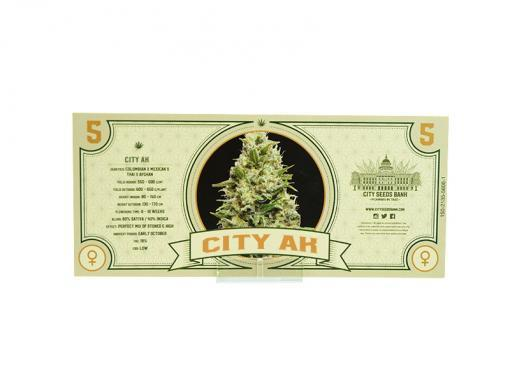 City AK Feminized