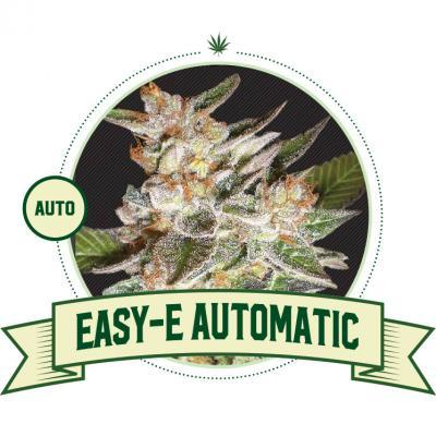 Easy-E Automatic flowering