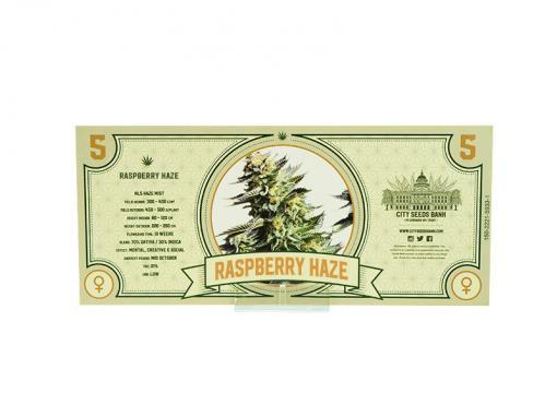 Raspberry Haze Cannabis Seeds