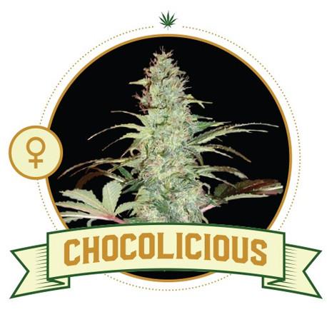 Chocolicious
