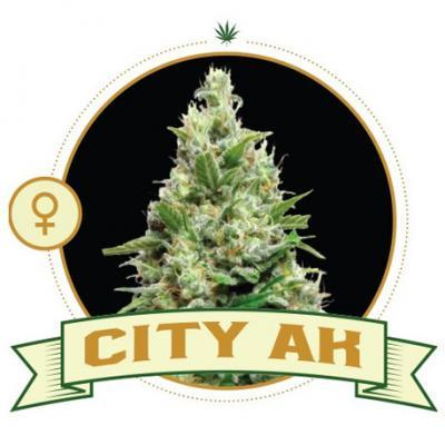 City AK