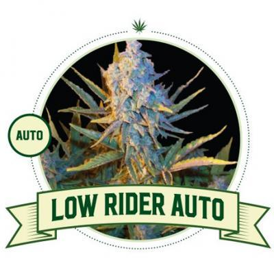 Low Rider Automatic Cannabis Seeds