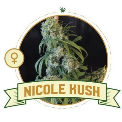 Nicole Kush Feminized Cannabis Seeds