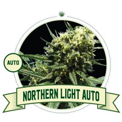 Northern Light Auto