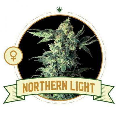 Northern Light Feminized Cannabis Seeds