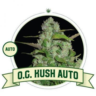 OG Kush Automatic