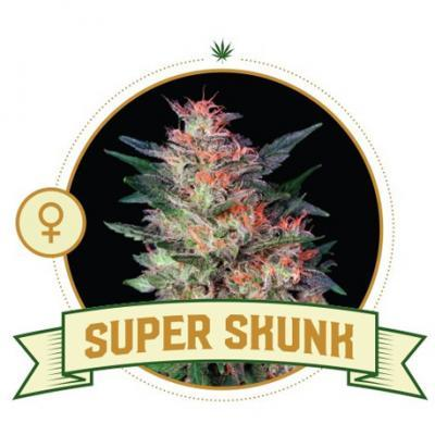 Super Skunk Cannabis Seeds