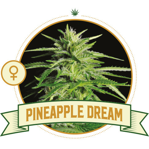 Pineapple Dream