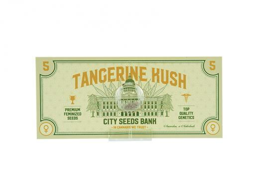 Tangerine Kush Cannabis seeds