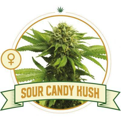 Sour Candy Kush