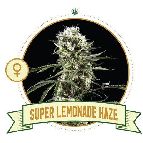 Super Lemonade Haze Cannabis Seeds