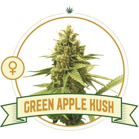 Green Apple Kush Feminized Cannabis Seeds