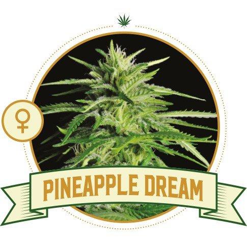 Pineapple Dream Cannabis Seeds