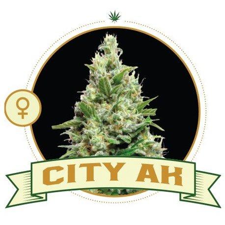 City AK Feminized
