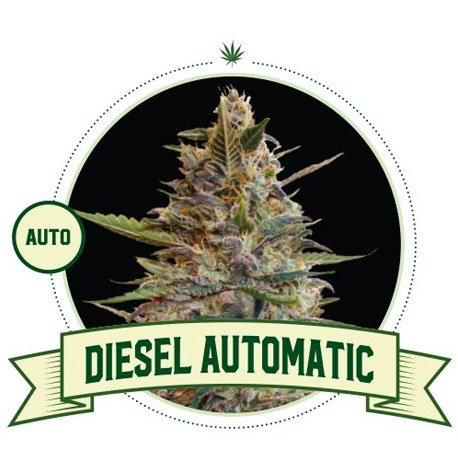 Diesel Automatic Cannabis Seeds