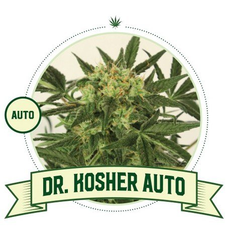 Dr Kosher Automatic Flowering Cannabis Seeds