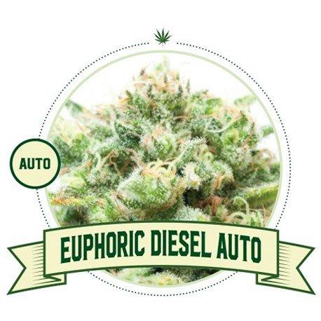 Euphoric Diesel Automatic Cannabis Seeds
