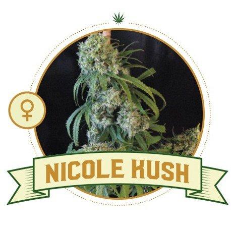 Nicole Kush Feminized Cannabis Seeds